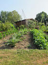 rond-point-potager2